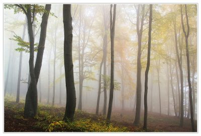 Un asesino de niñas se oculta en los bosques navarros.